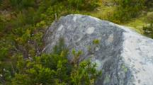 Rocks, Covered In Lichens, Moss And Low Vegetation Growing In The Valley Beneath Mount Cook.