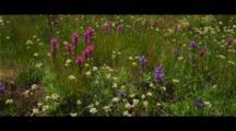 Wildflowers in Tuolumne Meadows, view of Lembert Dome