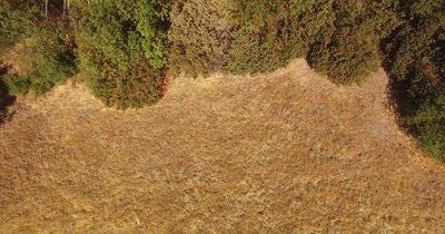 Arial Redwoods