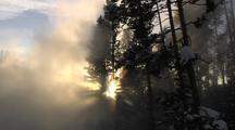 Steam Rising In Front Of Trees In Sunlight