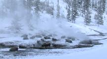 Bison (Bison Bison) Stand And Rest In Thermal In Steam And Snow