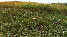 Mushroom Surrounded By Plants