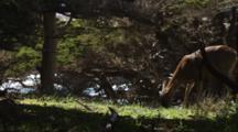 Deer Feeding In Forest