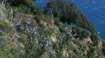 Ceanothus Plant Blows In Wind Above Ocean