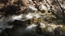 Stream Runs Next To Redwood Tree