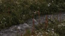 Snow Falls On Alaska Stream