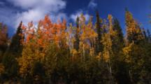 Mixed Forest With Fall Colors