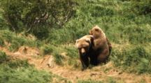 Grizzly Bear With Cub Scares Away Eagle