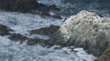 Sea Bird Colony