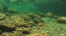 Underwater, Mouth Of River, Travel Over Rocky Bottom