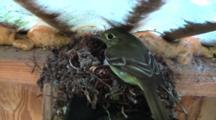 Bird Lands On Nest With Eggs