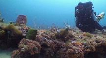 Rebreather Diver Watching Green Moray Eel