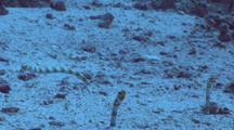 Spendid Garden Eels Feeding