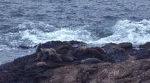 South East Farallon Island Sea Lion Rookery