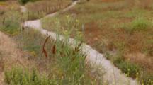 Desert Cottontail Rabbbit Hops Across Trail