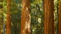 Subterranean Termites Fly Through Rewood Forest