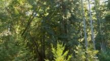 Subterranean Termites, Static Shot As Swarm Flys Away Through Forest