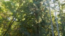 Subterranean Termites, Pan Upward As Swarm Flys Away Through Forest