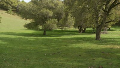 California Tiger Salamander habitat,oak woodland where squirrels live