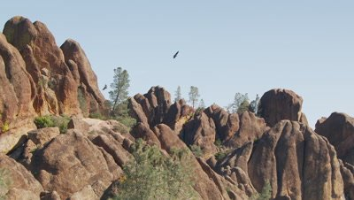 California condor soar near rock pinnacles
