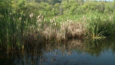 Western Pond Turtle,habitat