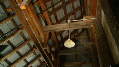 Bats,Townsend's big-eared bats,flying high in the rafters