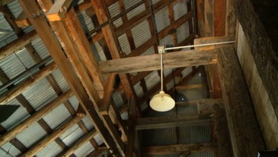 Bats,Townsend's big-eared bats,fly through rafters