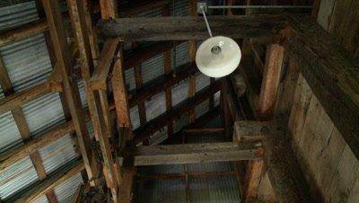 Bats,Townsend's big-eared bat,ultra wide,bats fly through rafters