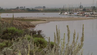 Elegant tern flock behind wetland branches,see boats in harbor
