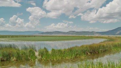 Marshland habitat for the white faced ibis