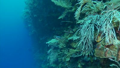 Hard corals,sponges,soft corals,sea fans,beautiful underwater scenic