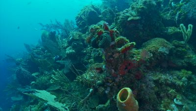 Sponges,soft corals,sea fans,beautiful underwater scenic