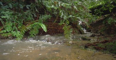 Creek flowing hard at ground level, redwood forest, 48 fps