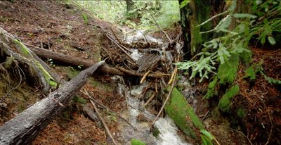 Seasonal creek, winter rain in redwood foreat