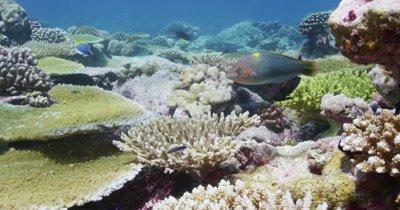 Various fishing swimming through reef