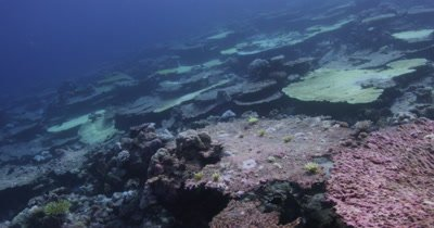 Pan over to divers viewing the bleached tabletops.