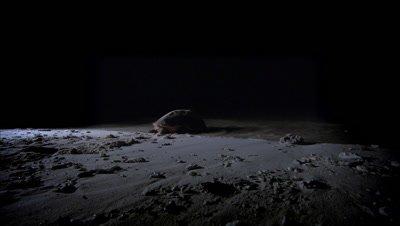 Loggerhead turtle returns to the sea