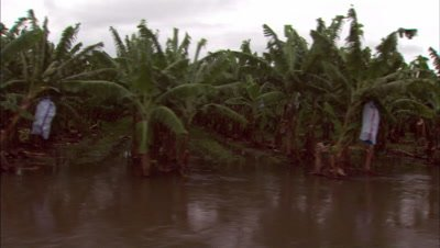 Tropical Flooding during the Monsoon, Wet Season