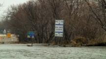 Canada Geese Maneuver High Water On Flood Plain Asphalt Road