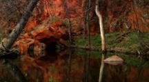 Red Rock And Tree Reflections In Creek At South Dakota Custer State Park