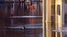 Canada Goose Swims Near Flooded Gazebo