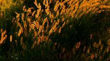 Breeze Over Flora At Sunset
