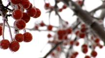 Ice on Berries