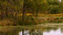 Picturesque Autumn Scene