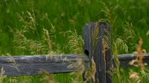 Fence Post In Prairie