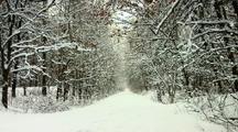 Snow Falls In Woods
