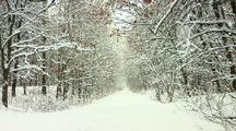 Light Snowfall In Woods
