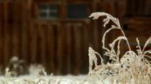 Historic Mormon Row Barn Is Among Grassland In Grand Teton National Park