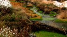 Yellowstone's Winter Creek Flows Over Intense Green Vegetation