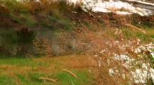 Thermal Steam Merges With Snow Flurries Near Winter Creek In Yellowstone